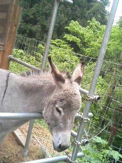 image/akiyamakoubou-2006-05-15T15:40:44-1.JPG