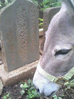 image/akiyamakoubou-2006-07-17T19:54:49-1.JPG