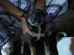 子犬1圧縮.jpg