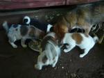 母犬と子犬たち圧縮.jpg