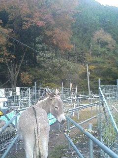 image/akiyamakoubou-2005-11-07T15:31:27-1.JPG