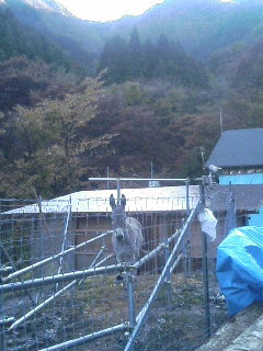 image/akiyamakoubou-2005-11-13T20:31:54-1.JPG