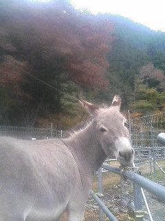 image/akiyamakoubou-2005-11-14T10:59:59-1.JPG