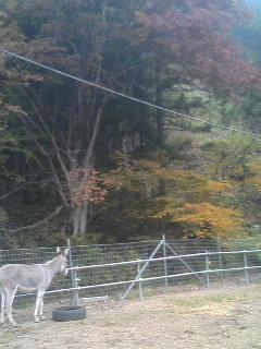 image/akiyamakoubou-2005-11-26T23:05:15-1.JPG