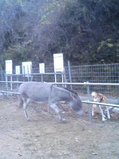 image/akiyamakoubou-2005-12-03T22:46:59-1.JPG