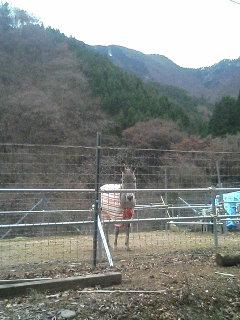 image/akiyamakoubou-2005-12-16T21:16:36-1.JPG