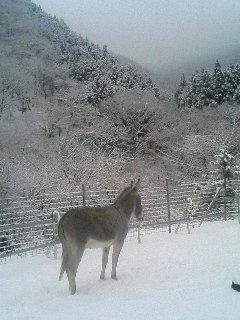 image/akiyamakoubou-2006-01-21T13:39:58-1.JPG