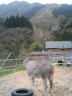 image/akiyamakoubou-2006-04-27T17:59:37-1.JPG
