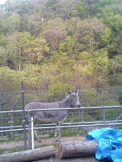 image/akiyamakoubou-2006-05-01T17:21:42-1.JPG