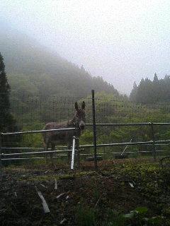 image/akiyamakoubou-2006-05-10T17:08:13-1.JPG