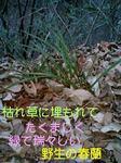 070113_1700~0001-0001-0001.jpg